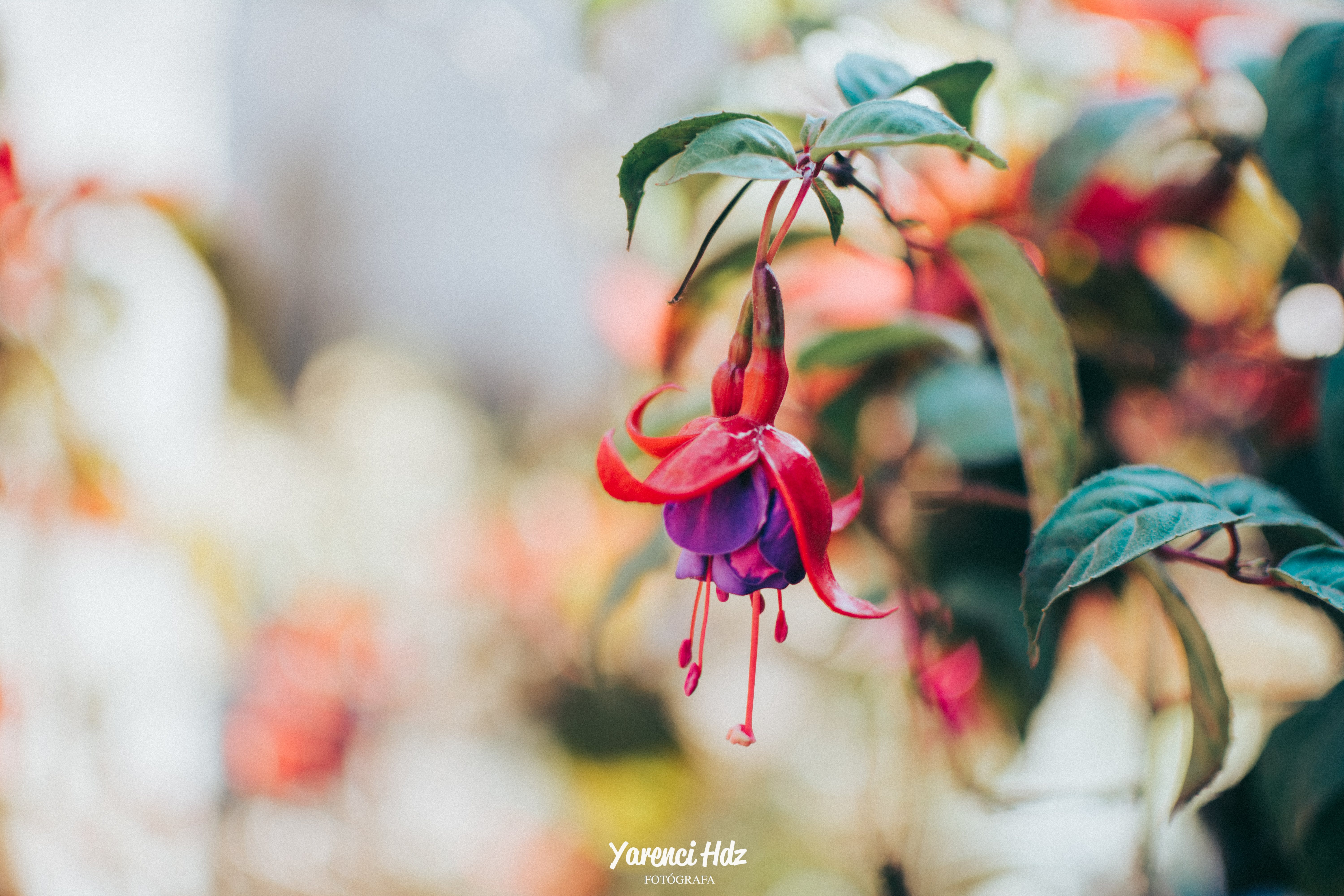 Free stock photo of flower, green