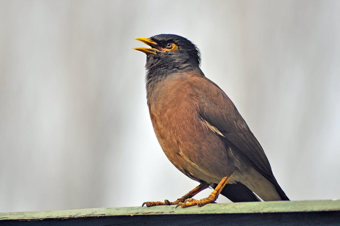 állat, közelkép, madártan
