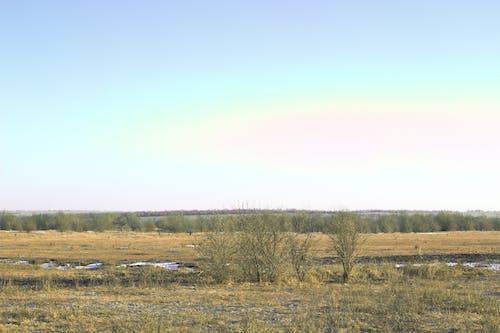 Безкоштовне стокове фото на тему «гора, горизонт, дерева, дерево»