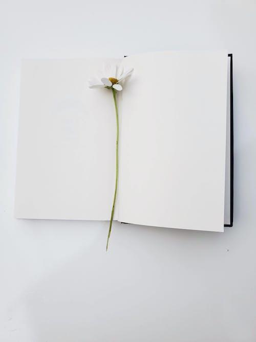 White Flower on White Paper