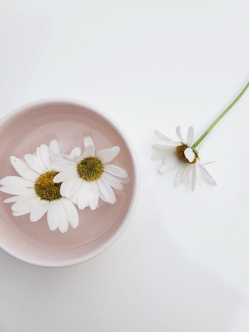 White and Pink Flower on White Ceramic Plate
