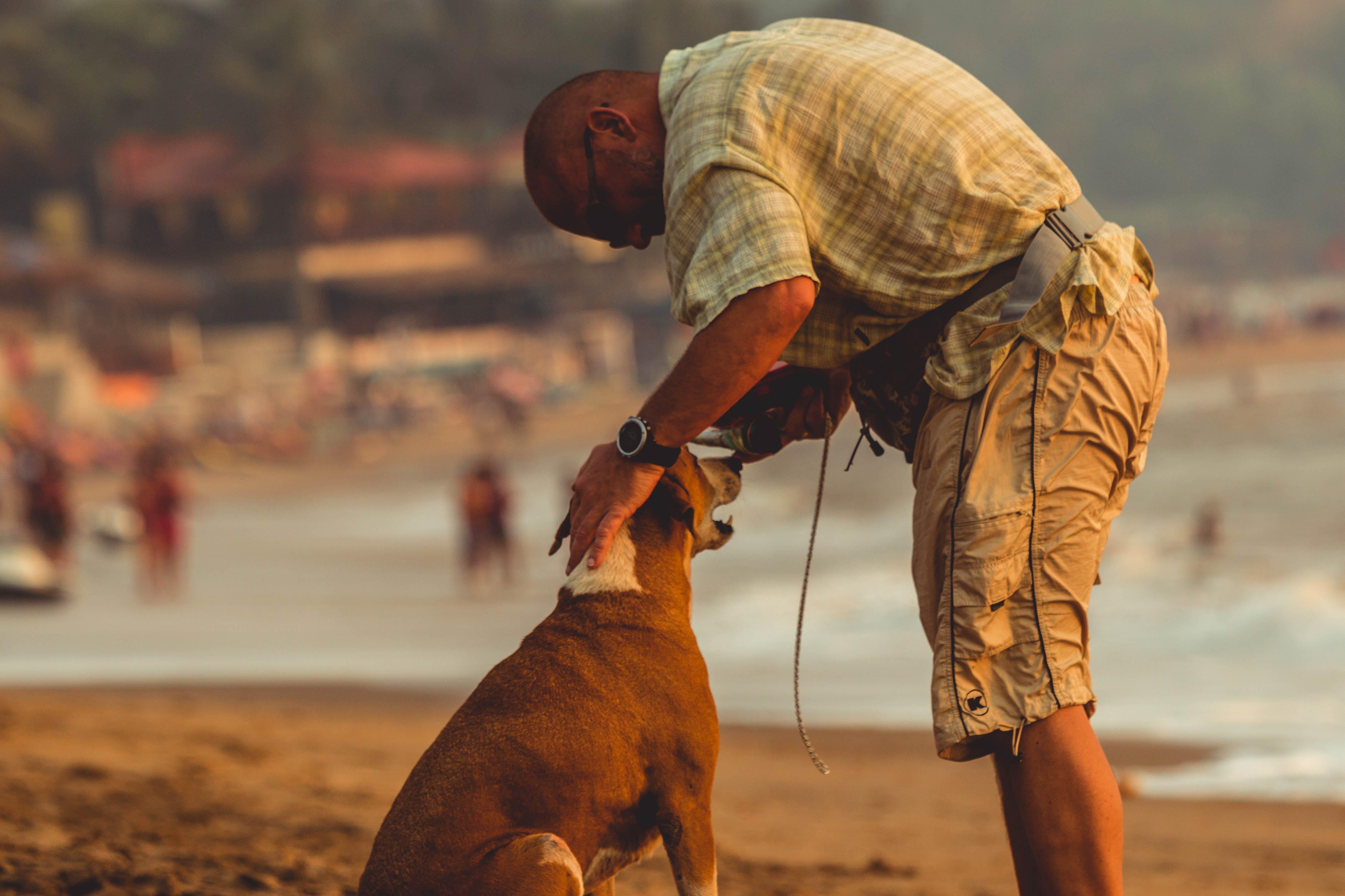 Free stock photo of man, beach, ocean, dog