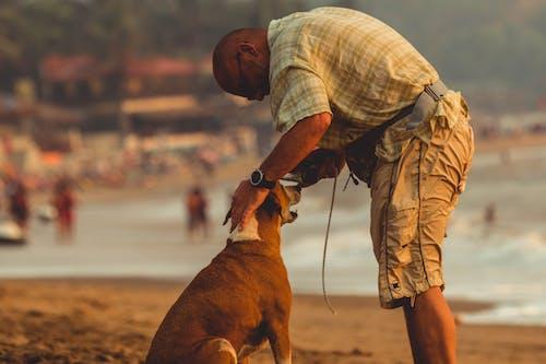Kostenloses Stock Foto zu hund, mann, ozean, strand