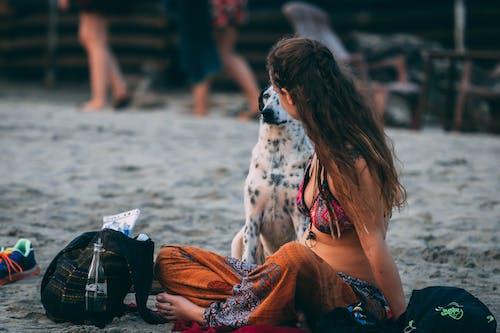 Kostenloses Stock Foto zu bezaubernd, dalmatiner, entspannung, erholung