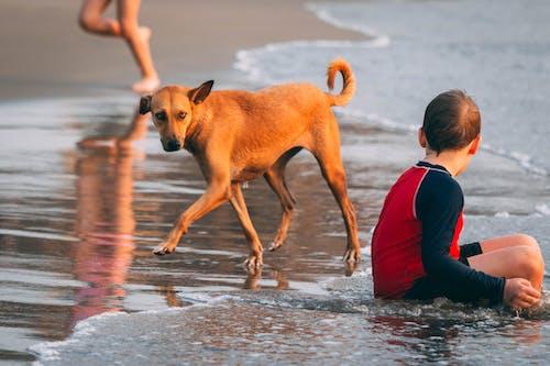 Kostenloses Stock Foto zu action, baden, entspannung, erholung
