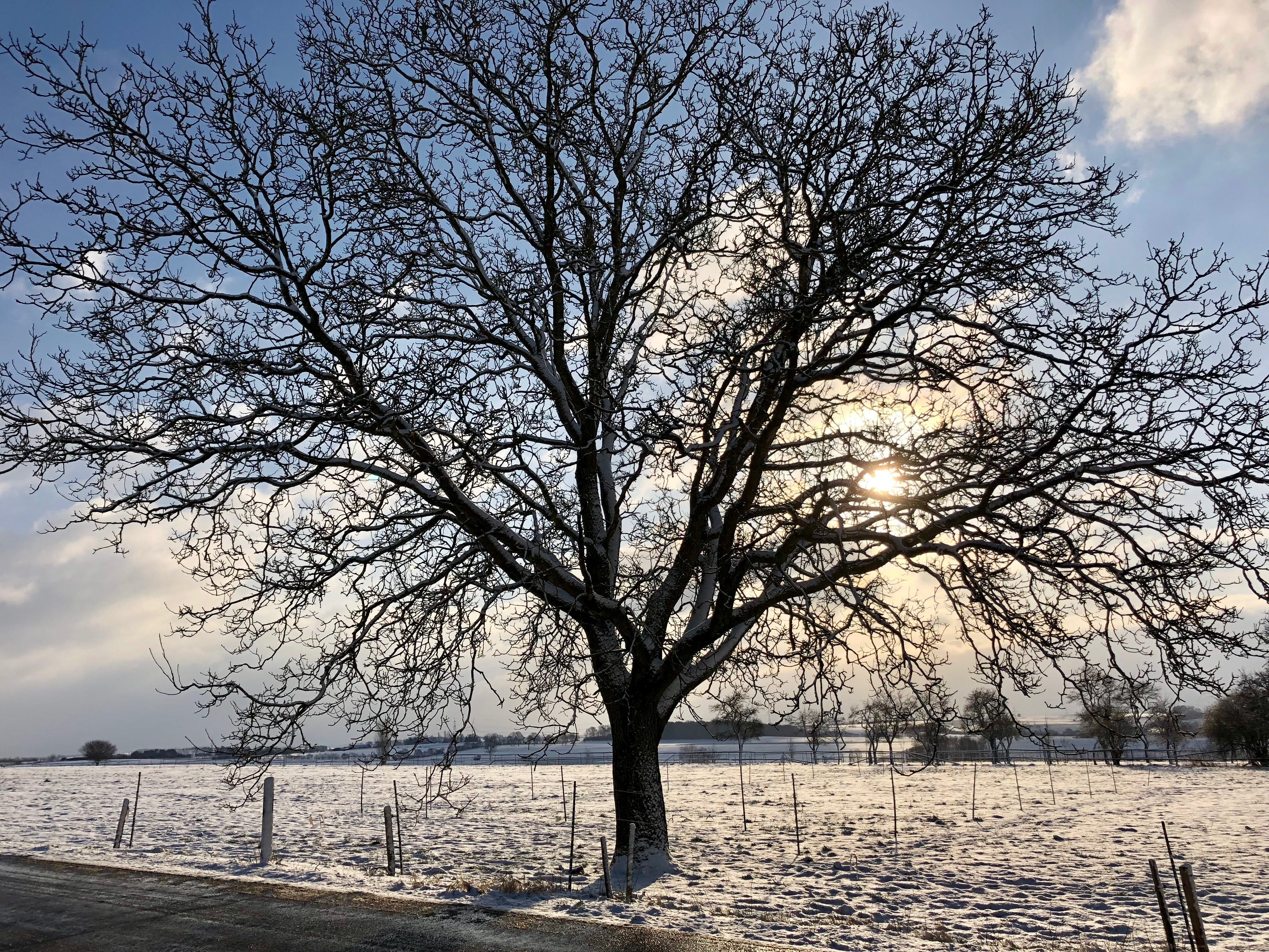 Free stock photo of #winter #nature #germany