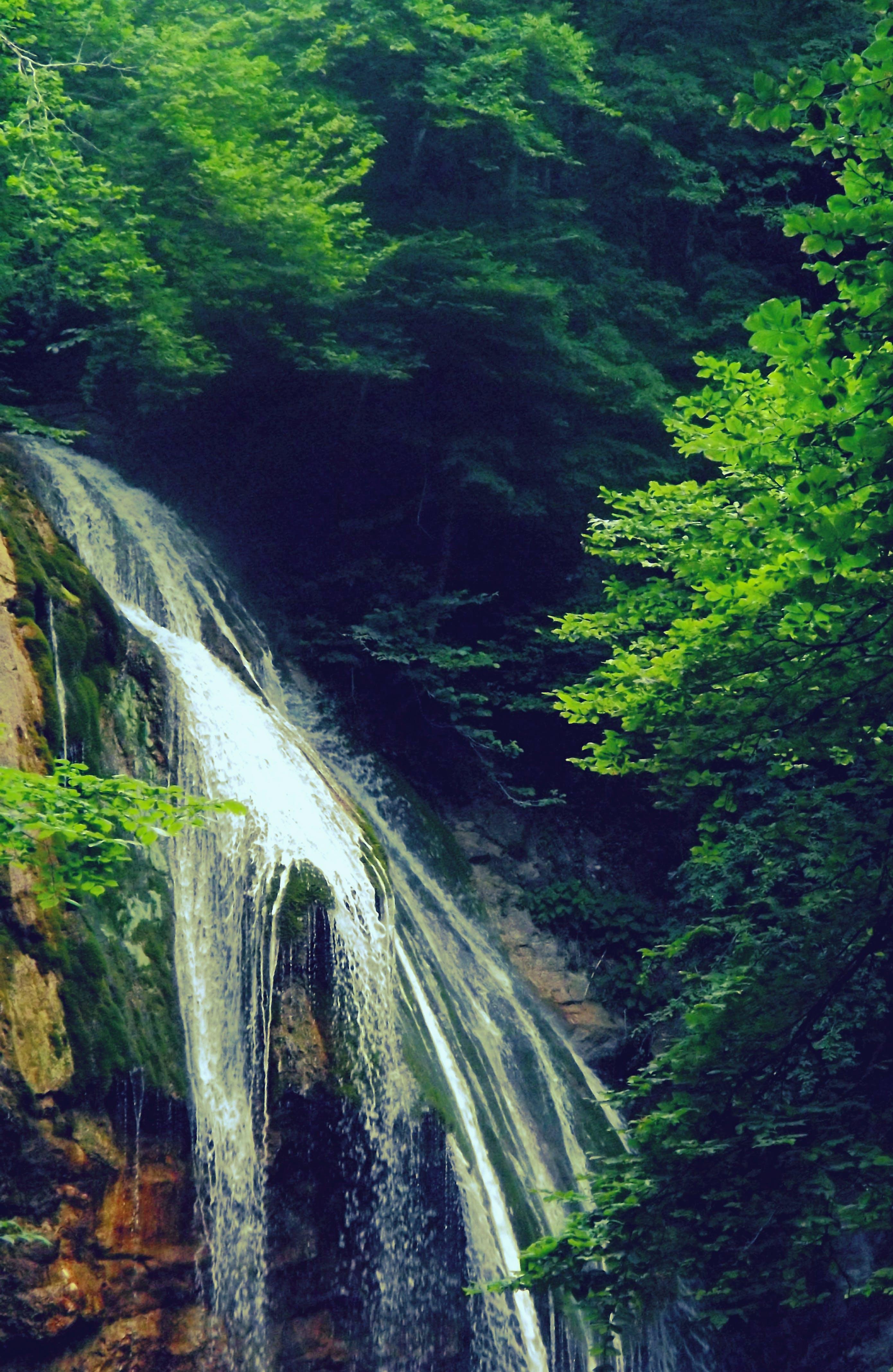Fotos de stock gratuitas de agua, arboles, bosque, cámara rápida