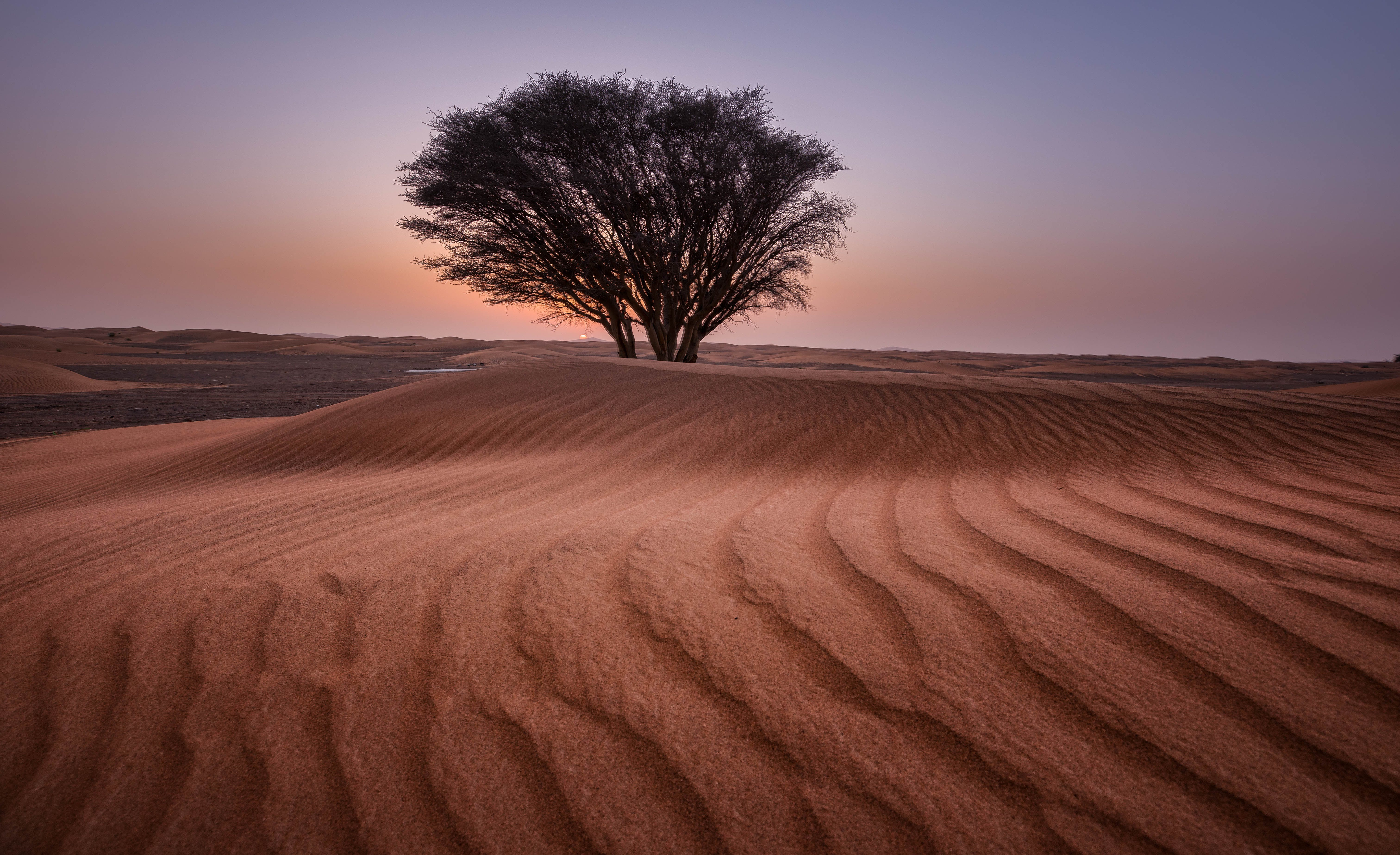 Green Tree in the Middle of Desert