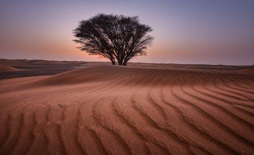 Darmowe zdjęcie z galerii z drzewo, gorąco, jałowy, krajobraz