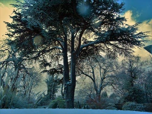 光, 公園, 冬季, 冰 的 免费素材照片