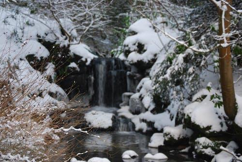 Free stock photo of branhes, bush, fife, ice