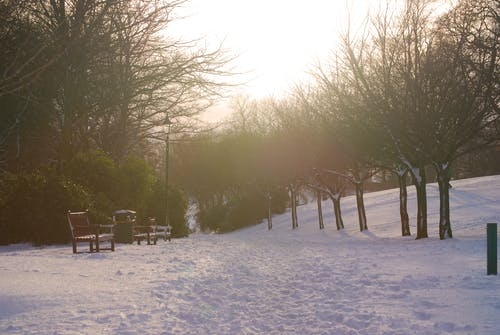 Free stock photo of bench, cold, fife, lamppost