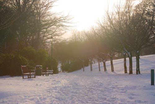 가로등 기둥, 감기, 겨울, 공원의 무료 스톡 사진