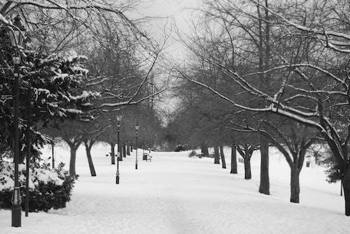 가로등 기둥, 겨울, 공원 벤치, 길의 무료 스톡 사진