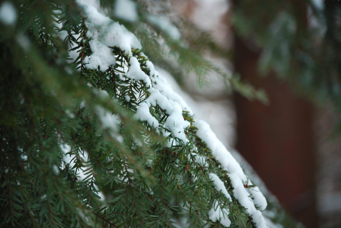 boże narodzenie, burza śnieżna, choinka