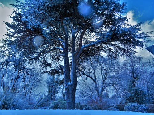 Low Angle Photography of Trees Covered With Snow
