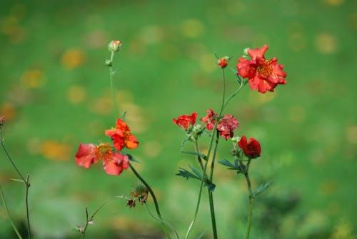 天性, 宏觀, 模糊, 紅色 的 免费素材照片