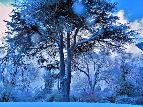 低角度拍攝, 光, 公園, 冬季 的 免费素材照片
