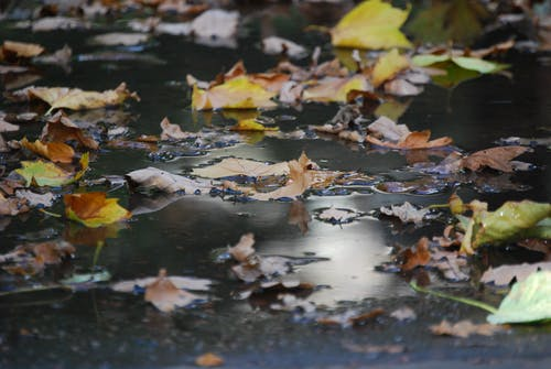 天性, 橙子, 水, 水坑 的 免费素材照片