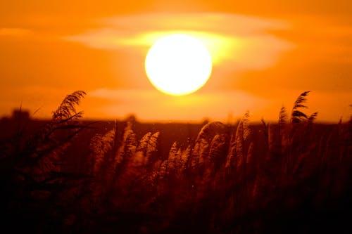 Безкоштовне стокове фото на тему «вечір, вечірнє небо, вечірнє сонце, жовтий»