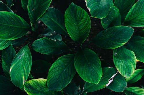 Foto profissional grátis de aumento, crescimento, ecológico