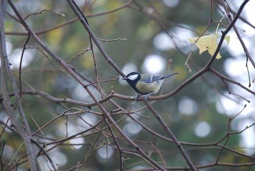 動物, 在树中的鸟, 天性, 小鸟 的 免费素材照片
