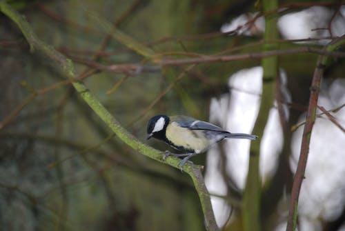 動物, 天性, 小鸟, 樹 的 免费素材照片