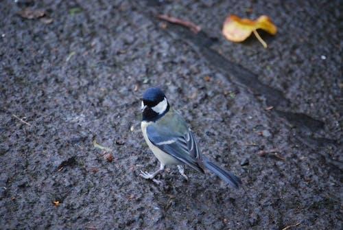 動物, 小動物, 小鸟 的 免费素材照片