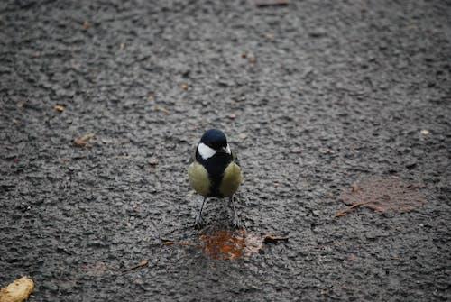 動物, 天性, 小動物, 小鸟 的 免费素材照片