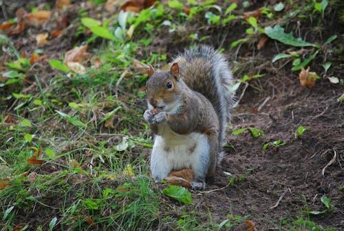 動物, 土, 堅果, 塵土 的 免费素材照片