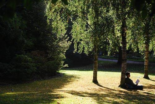 人, 公園, 太陽, 樹 的 免费素材照片