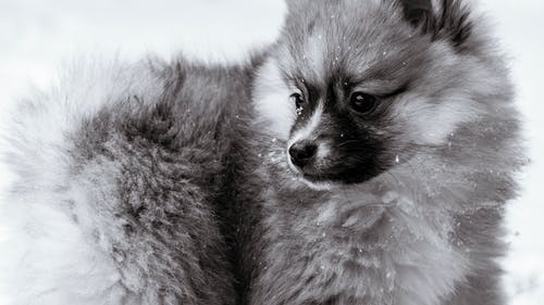 Free stock photo of beautiful, black and white, dog, images