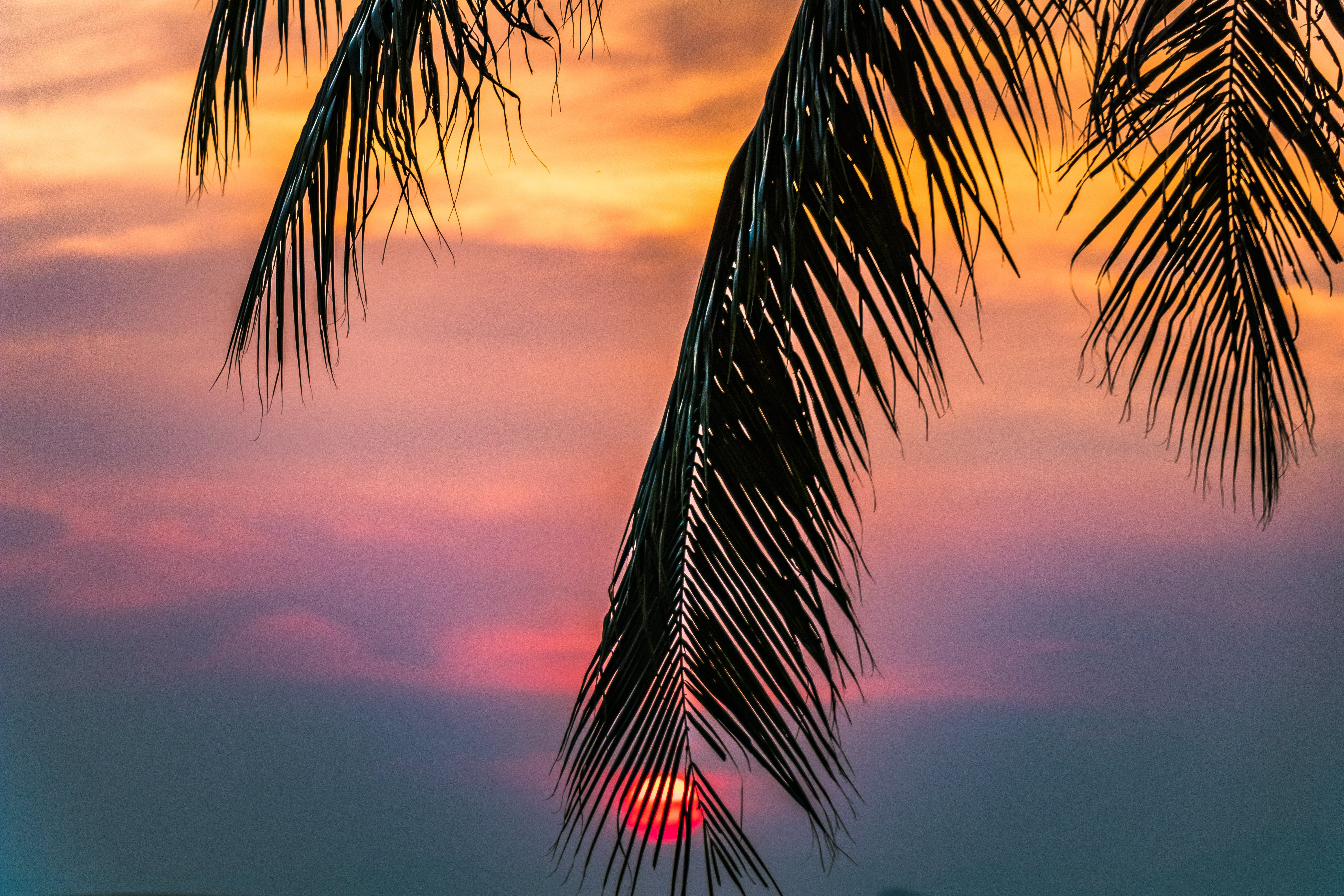Sun Covered With Coconut Tree during Sunrise