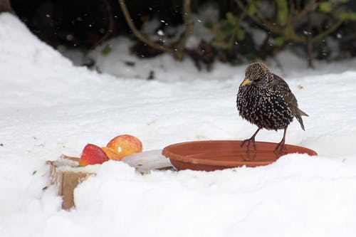Free stock photo of snow bird