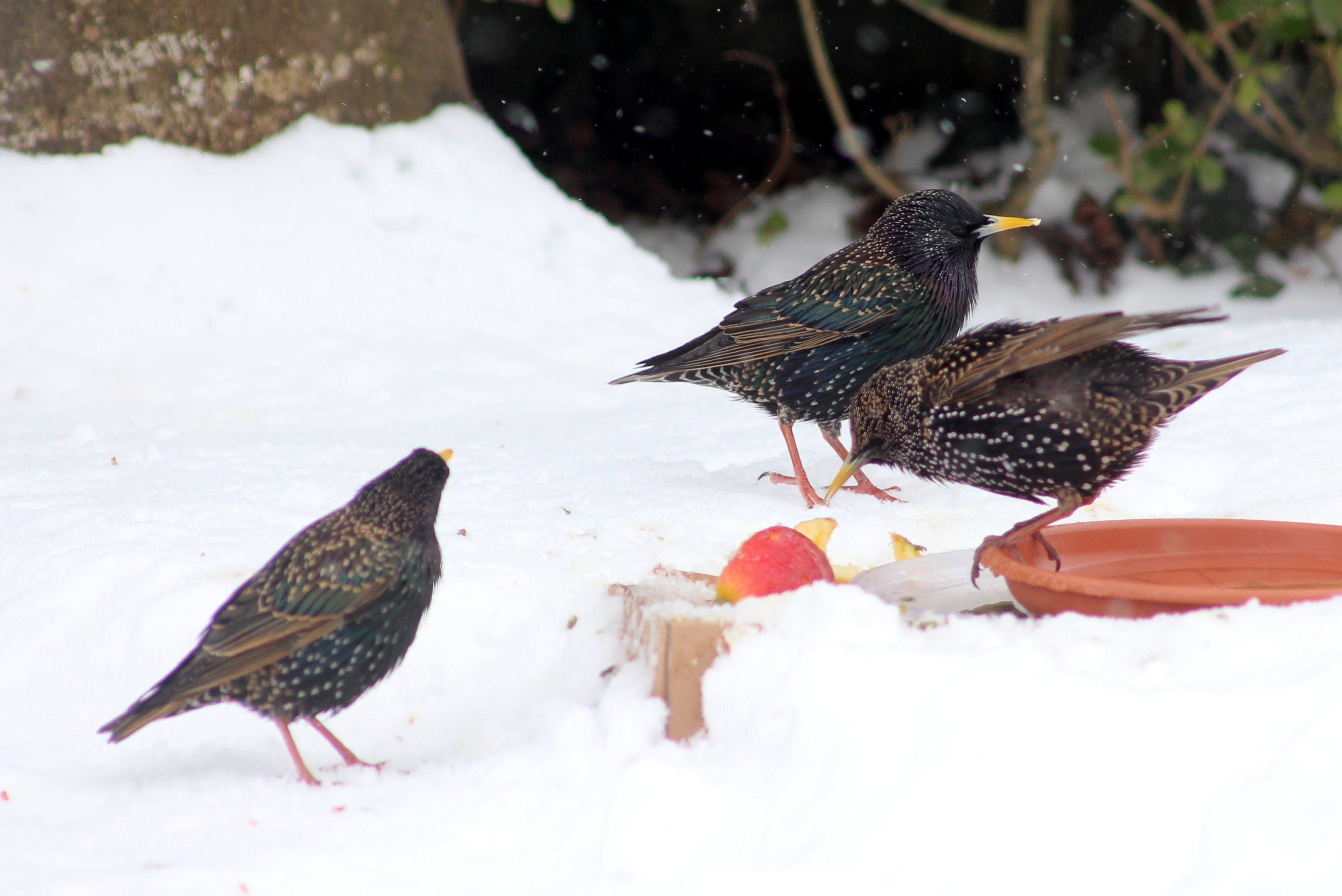 Three Birds on the Ground Surrounded by Snow