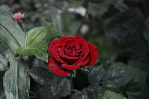 Foto profissional grátis de dramático, escuro, flores, flores bonitas