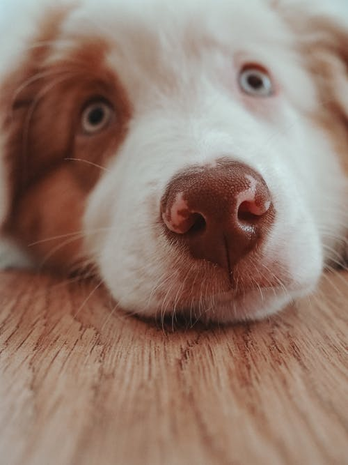 Close-Up Photo of a Dog's Face