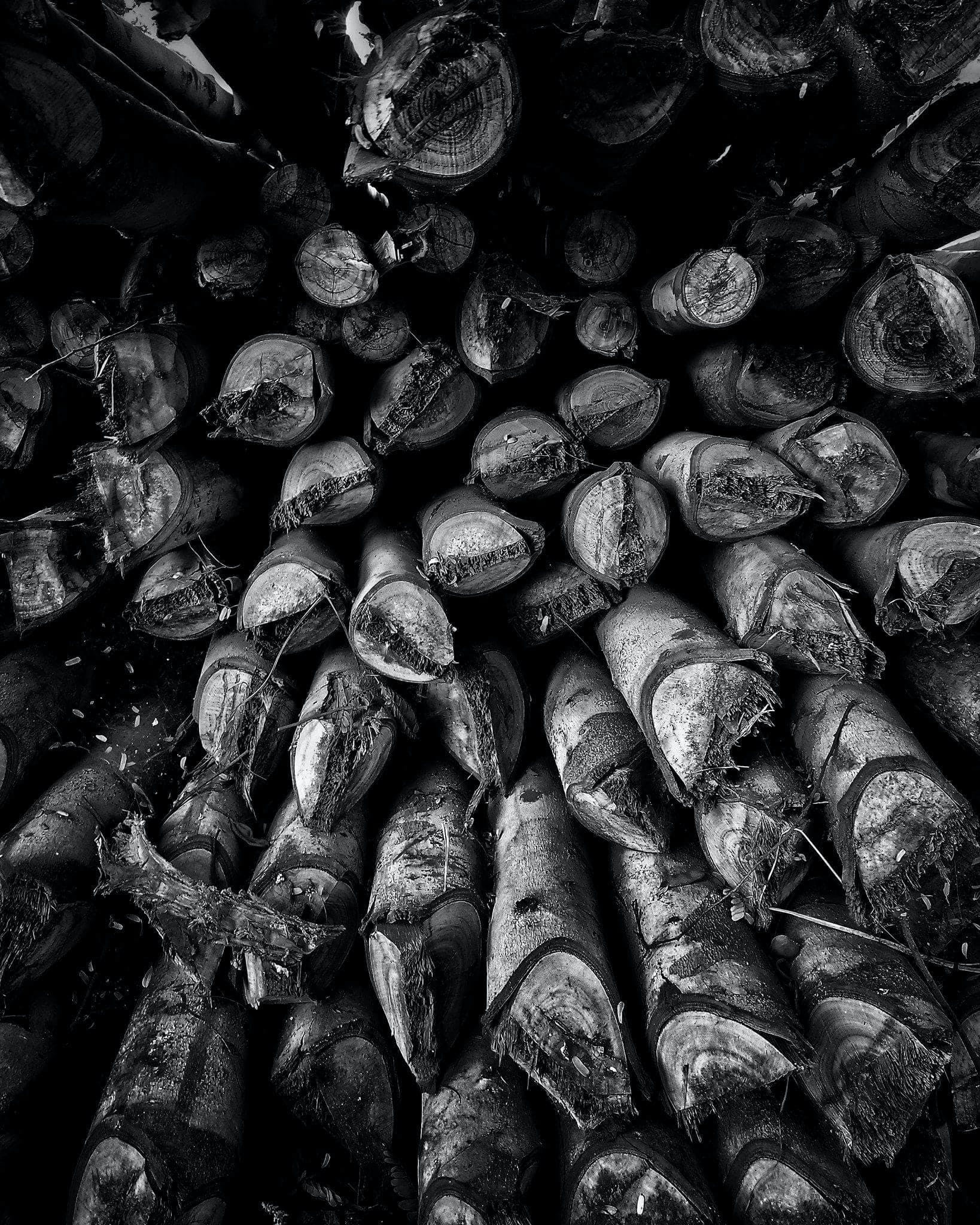 Free stock photo of wooden logs