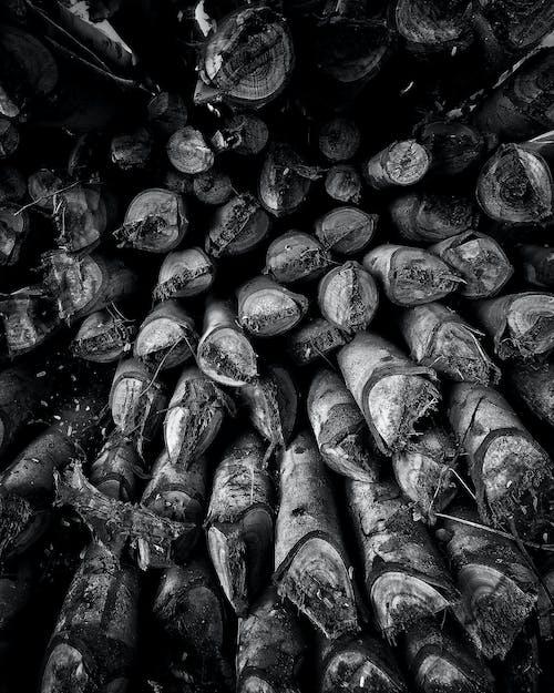 통나무의 무료 스톡 사진