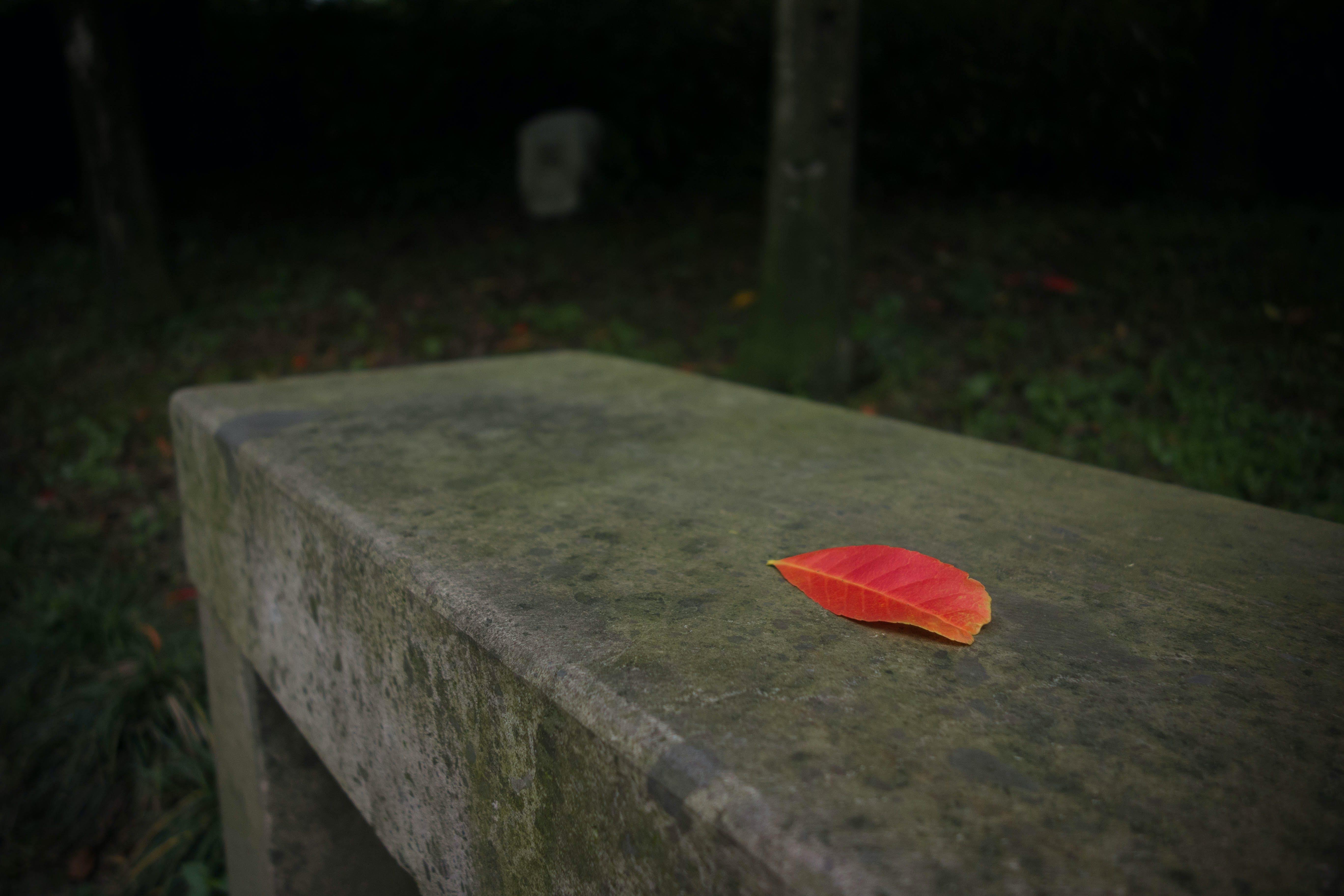 Imagine de stoc gratuită din minimalism