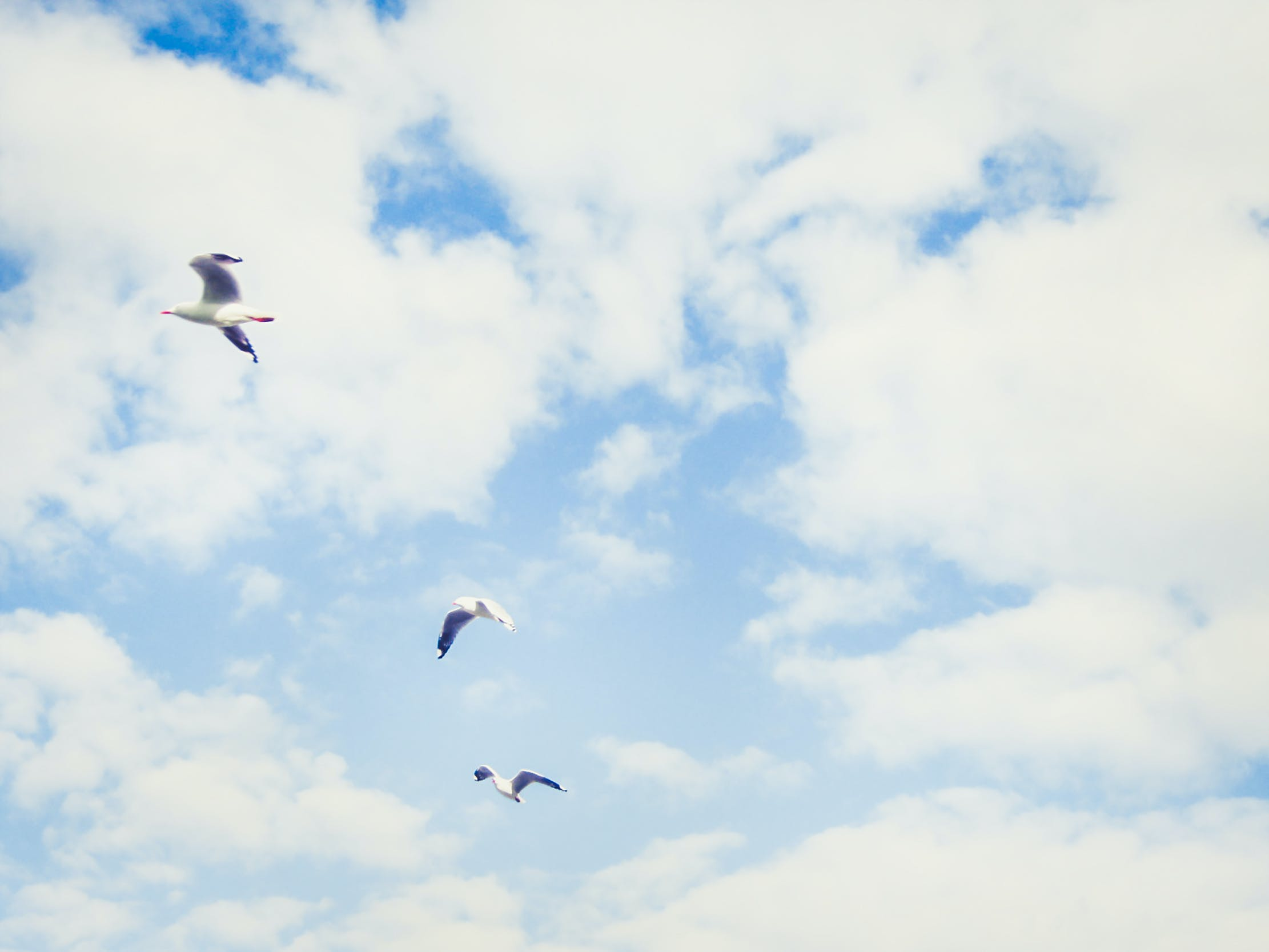 Free stock photo of birds, cloudy sky, minimalist