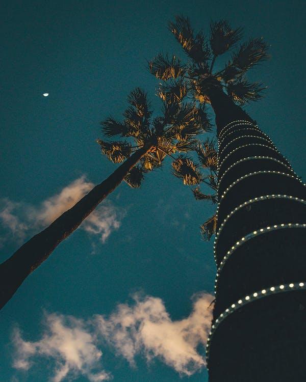 olho para cima, palmeiras