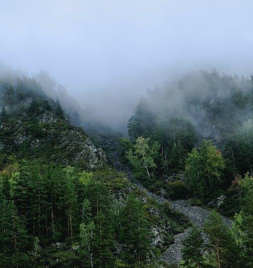 Immagine gratuita di alberi, collina, foresta