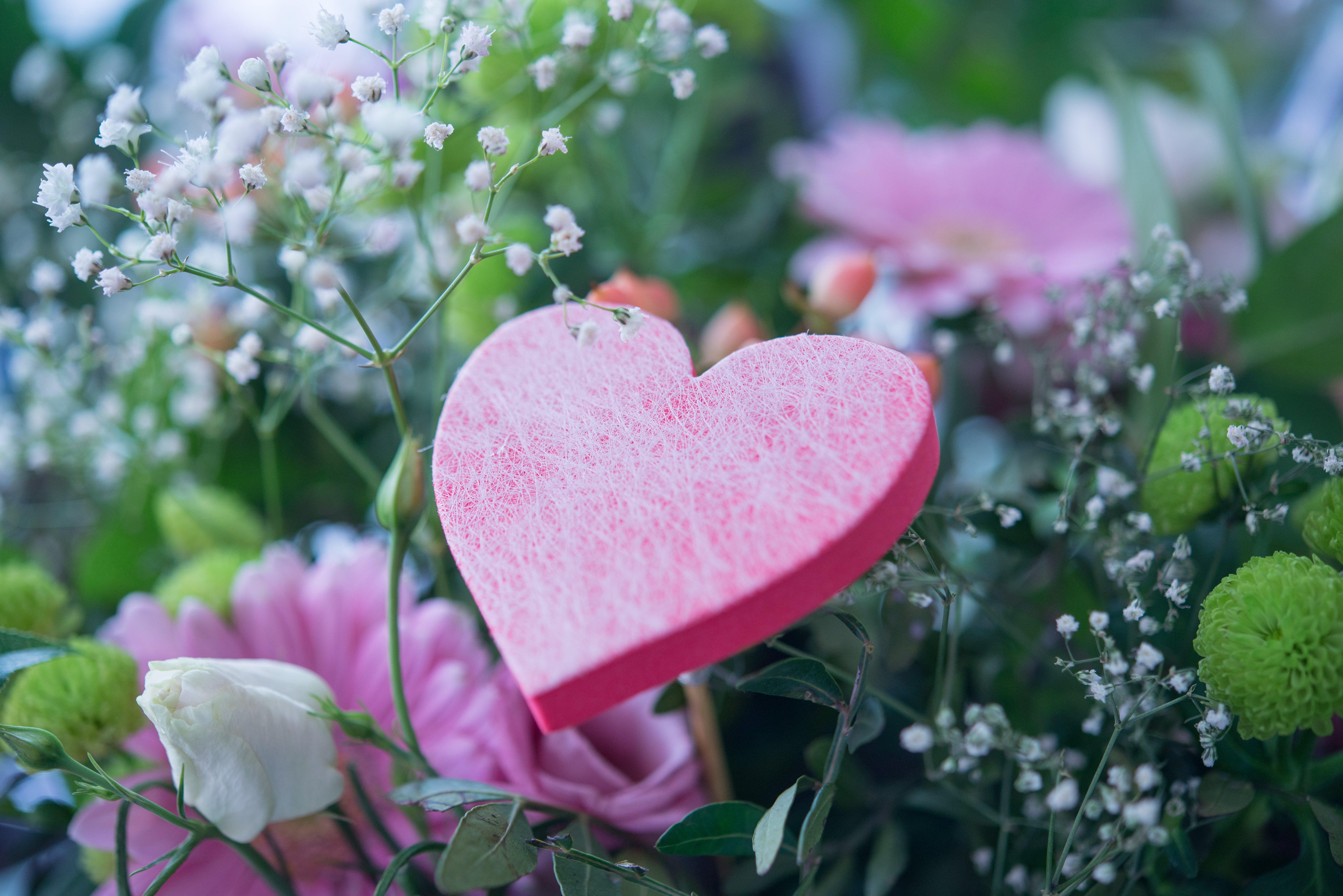 Free stock photo of love, woman, heart, flower