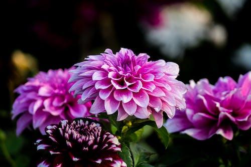 Photos gratuites de arrière-plan flou, bouquet de fleurs, brillant, couleurs
