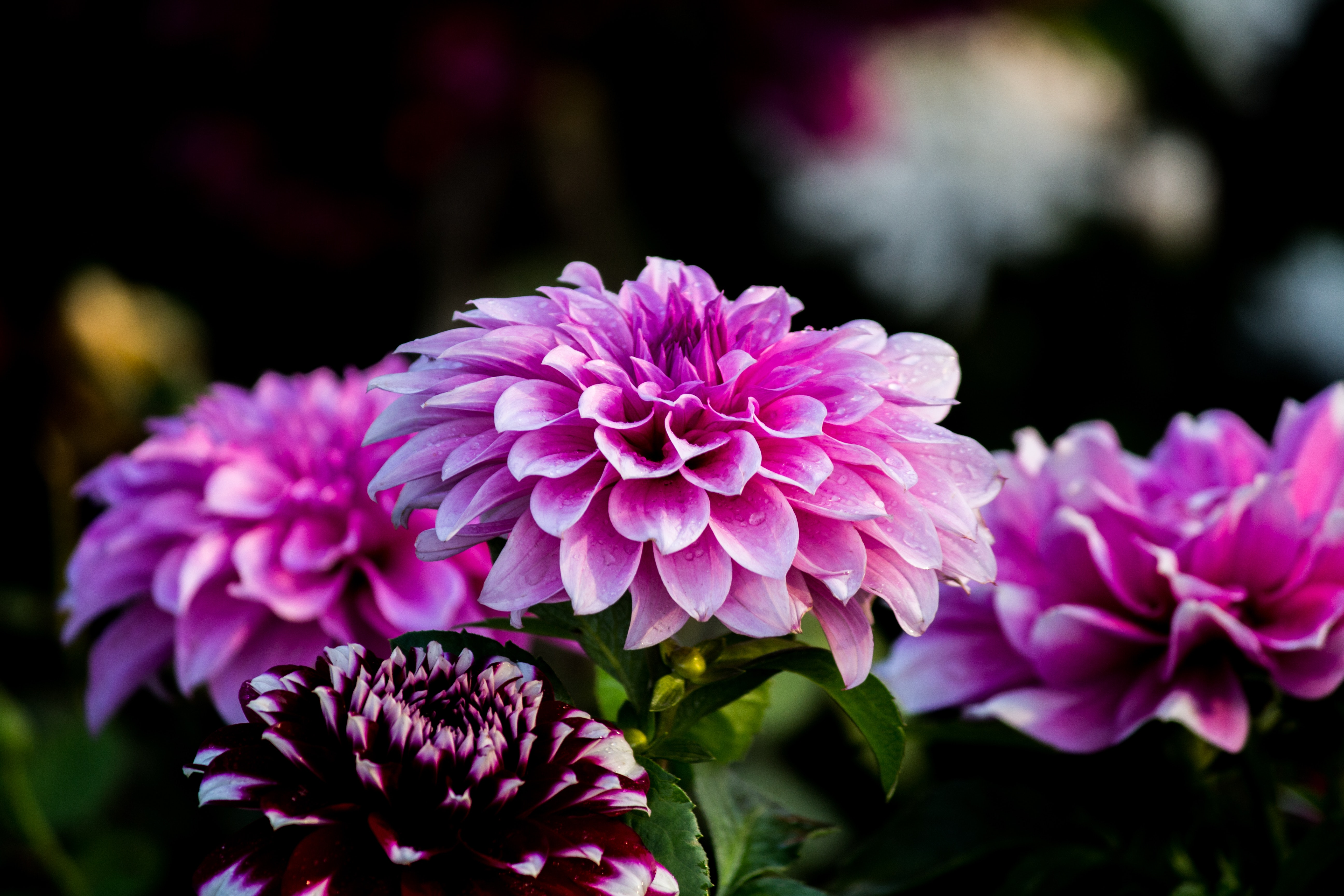Purple Flower Wallpaper Free Stock Photo