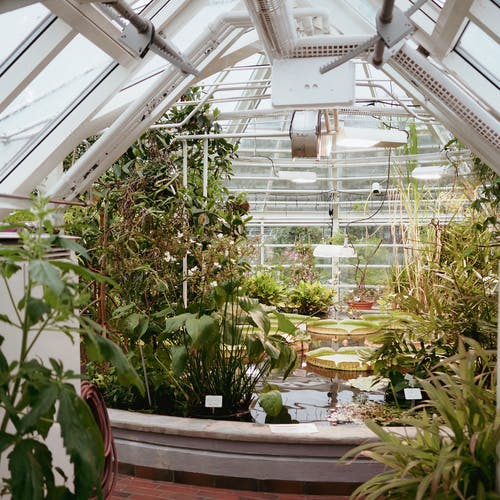 Free stock photo of botanical, conservatory, cultivation