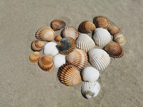 Free stock photo of beach, coast, confidence