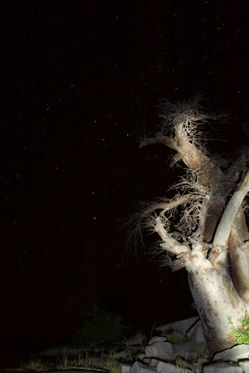 Afrika, ağaçlar, botsvana, gece içeren Ücretsiz stok fotoğraf