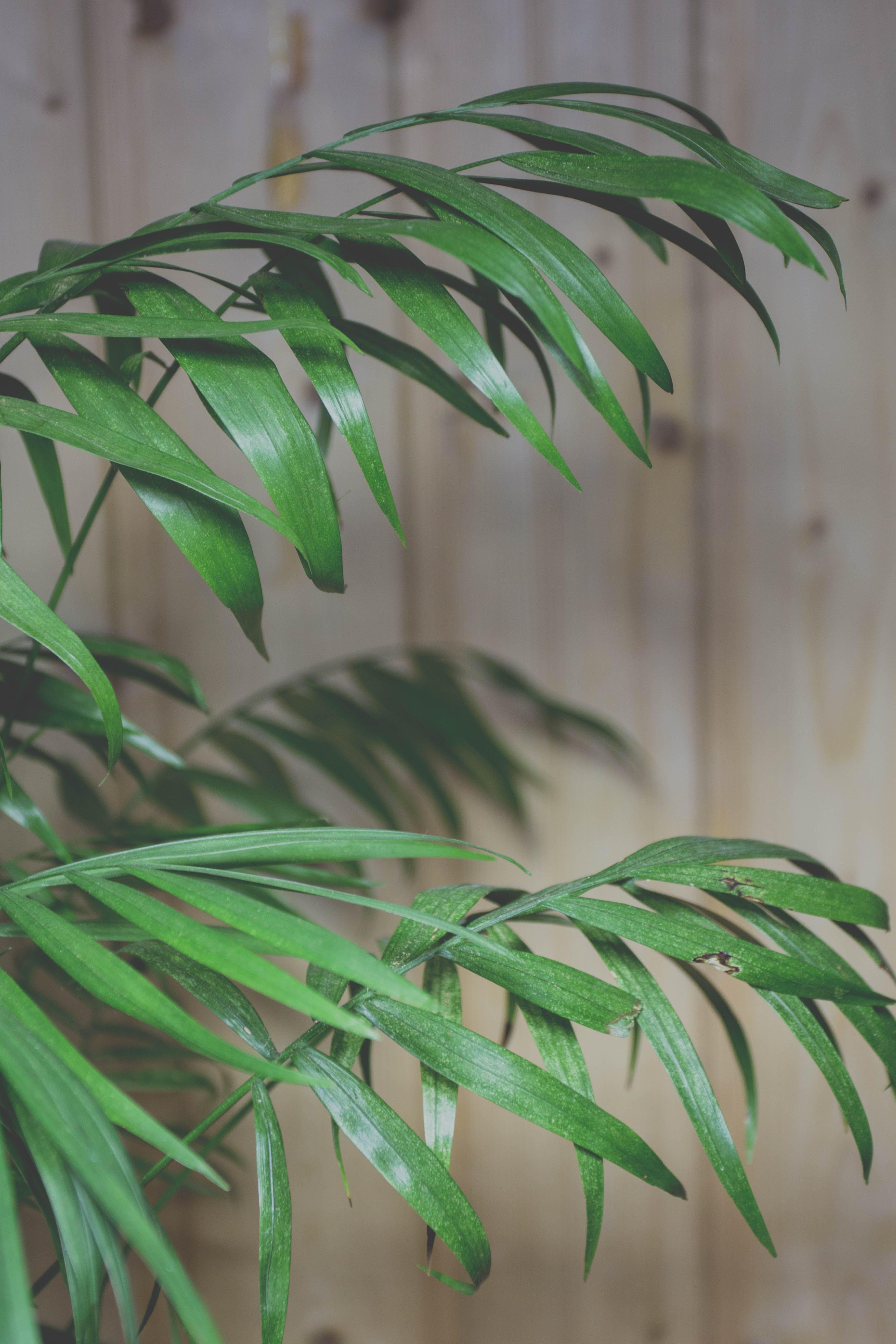 grün, pflanze, zierpflanze